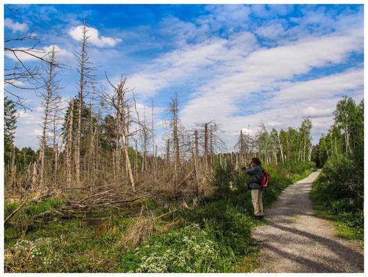 4576 Geflutete Totholzflächen im Ried