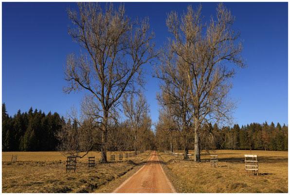 Landschaft im Unterhölzer Wald 6238