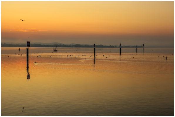 Morgendämmerung über dem Zeller See 0518