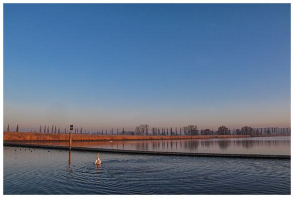 8453 Morgenstimmung am Bodensee bei Moos
