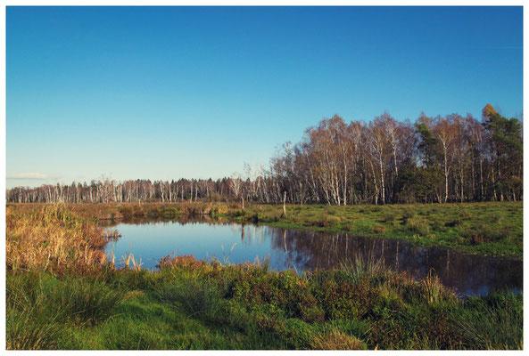 Feuchtwiese im Pfrunger-Burgweiler Ried 7255