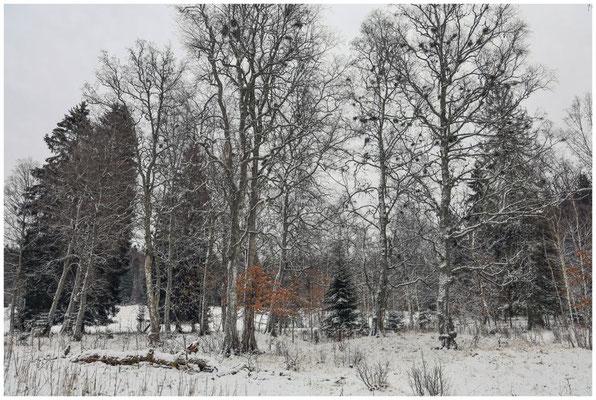 Landschaft im Irndorfer Hardt 5365