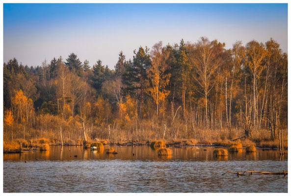 Uferlandschaft Schwenninger Moos 1608