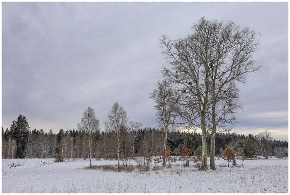 Landschaft im Irndorfer Hardt 5398