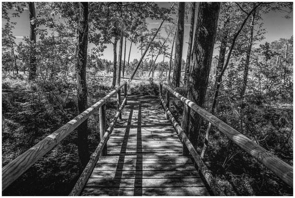 Holzbrücke im Wurzacher Ried s/w 3228