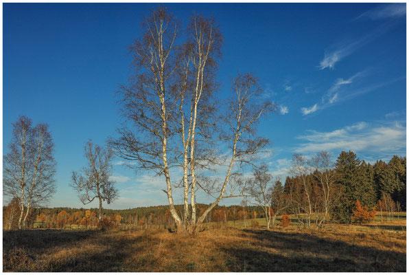 Landschaft im Irndorfer Hardt 4557