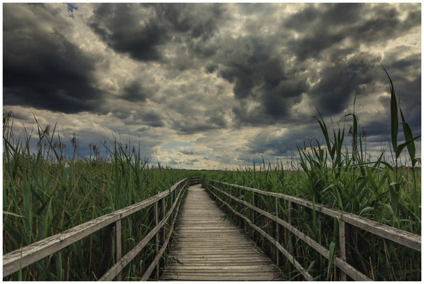 Federseesteg mit Schilf und dunklen Wolken 3428