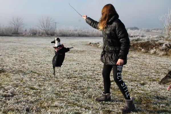 Temperamentvolle, rassetypische Boston Terrier aus Liebhaber-Zucht bei Luxemburg!