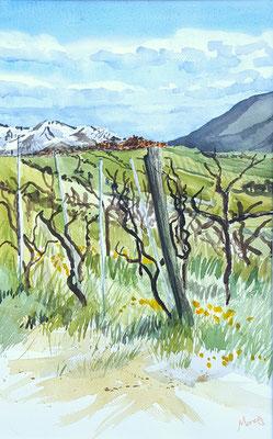 Vines in Springtime, Bassano