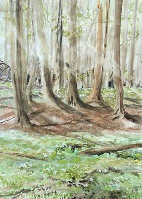 Forest Floor in Springtime