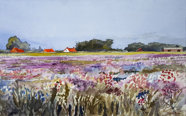 Field With Lilac Flowers