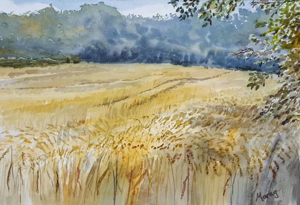 Wheat Field in Summer