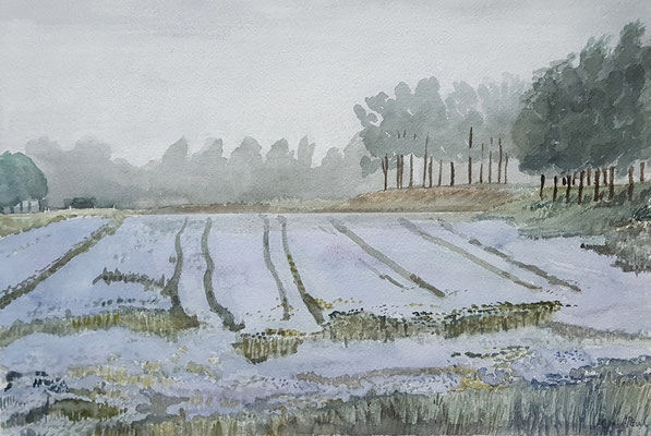 Morning in the Flax Fields