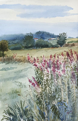 Willowherb, Eifel