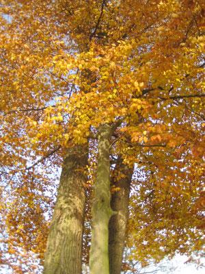 Herbstfarben, Farbberatung