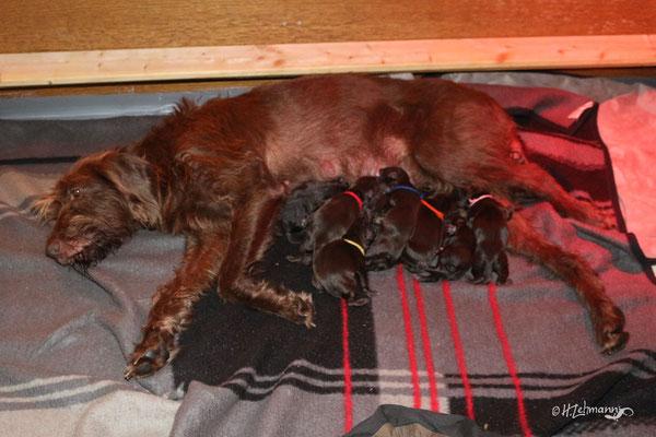 ... alle neun gesund bei der Mutterhündin liegen