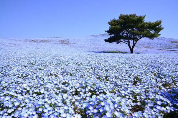 みはらしの丘の綺麗で美しい花畑