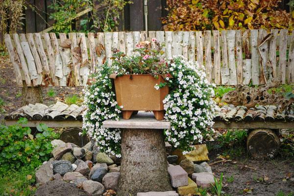 Blumen-Rose | Dezente Gartendekoration im Spätherbst.