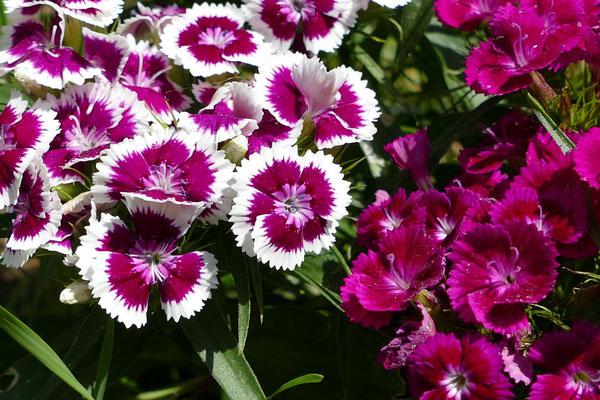 Blumen-Rose | Frühlingsblüten
