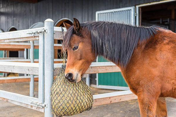 Braunes Pferd mit Futtersack am Pferdehof in Steinhöring