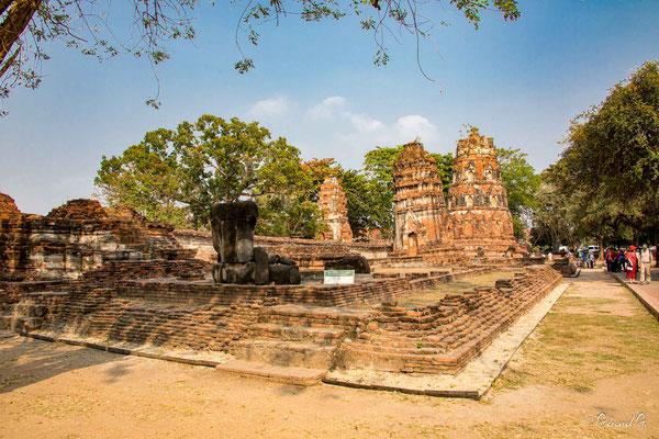 2019  02 - Ayutthaya , Wat Mahathat  -L10A5736