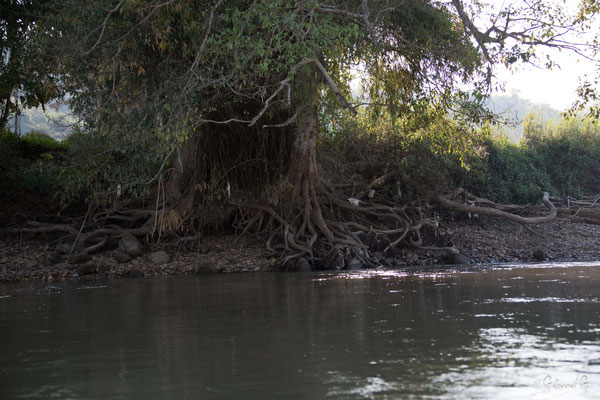 2019  02 - Chiang Rai, Sur la riviere Mae Kok   -L10A6522
