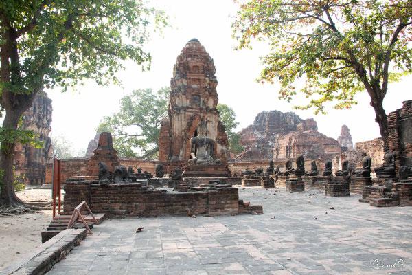2019  02 - Ayutthaya , Wat Mahathat  -L10A5715