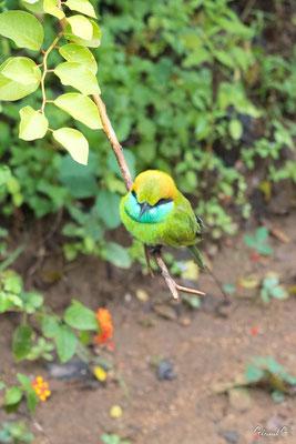 Yala park, Sri Lanka