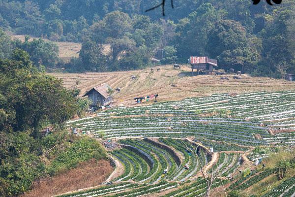 2019  02 - Chiang Mai, Doi Inthanon National Park   -L10A6896
