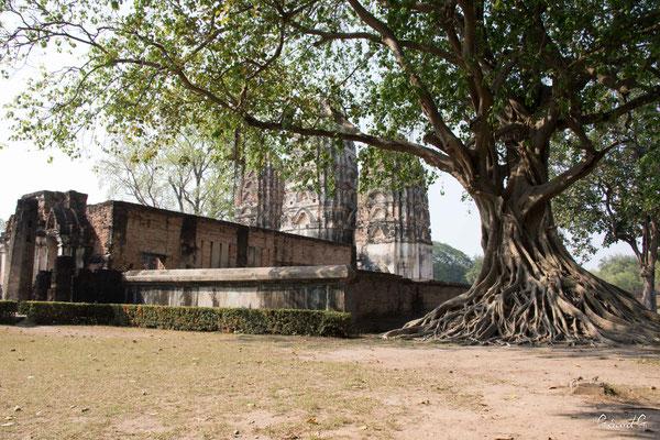2019  02 - Sukhotai , Wat Sri Savaya  -L10A6055