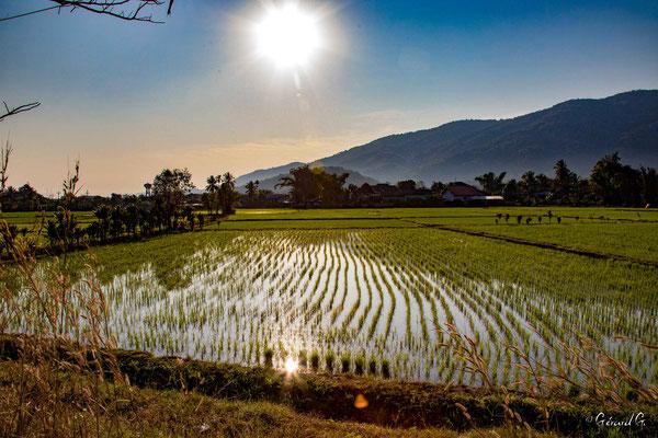 2019  02 - Chiang Rai, Riziere, Sur la route de Chiang Rai   -L10A6544
