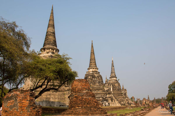 2019  02 - Ayutthaya , Wat Mahathat  -L10A5755