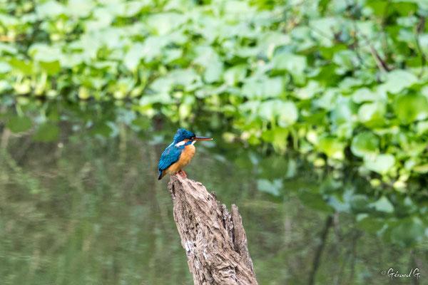 Buduruwagala, Sri Lanka