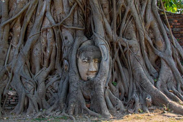 2019  02 - Ayutthaya , Wat Mahathat  -L10A5710