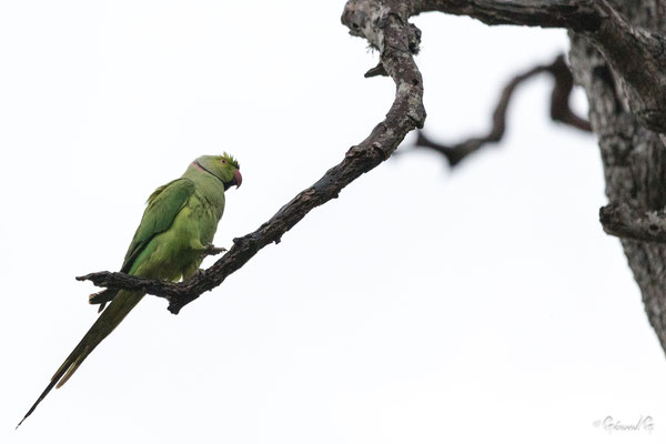 Bundala park, Sri Lanka