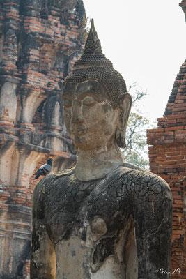 2019  02 - Ayutthaya , Wat Mahathat  -L10A5717