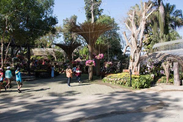 2019  02 - Doi Tung, Jardin botanique Mae Fah Luang   -L10A6608