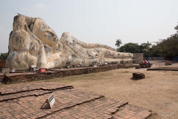 2019  02 - Ayutthaya , Wat Lokaya Sutha  -L10A5695