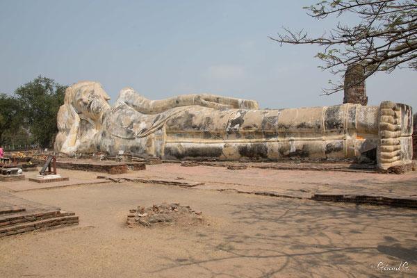 2019  02 - Ayutthaya , Wat Lokaya Sutha  -L10A5697