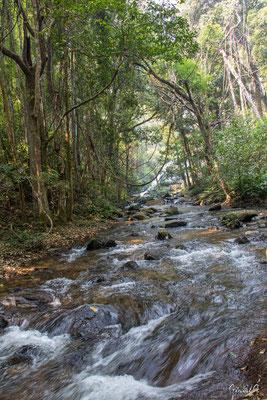 2019  02 - Chiang Mai , Wachirathan waterfall  -L10A6886