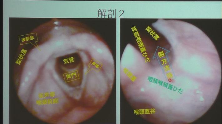 咽頭周辺の名称