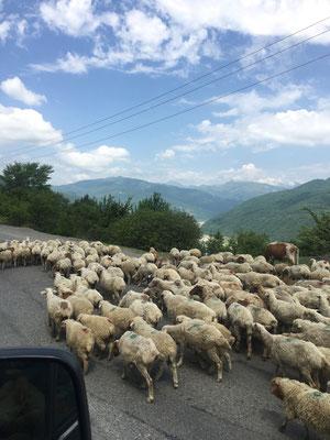 Ganz schön viele Schafe