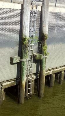 Auf Lärchenstämmen sind die Speichergebäude gebaut - sobald diese nicht mehr nachhaltig im Wasser stehen wird es bedenklich...