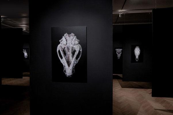 exhibition OO - Marta Zasępa,bwa Osltyn; 3-EFF4