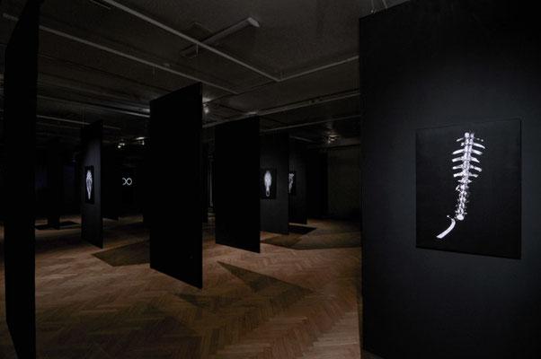 exhibition OO - Marta Zasępa,bwa Osltyn; 3-EFF5