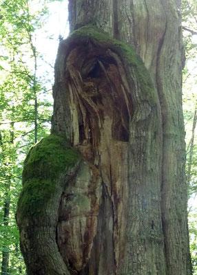 Ort eines Baumwesens (Eiche)