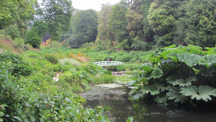 Mittwoch: Rundgang durch den Trebah Garten (4 von 6).