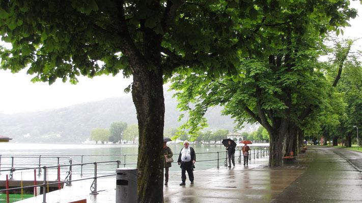 Dienstag: Rundgang entlang der See Promenade in Bregenz
