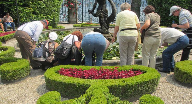 Freitag: Botanischer Garten der Villa Carlotta
