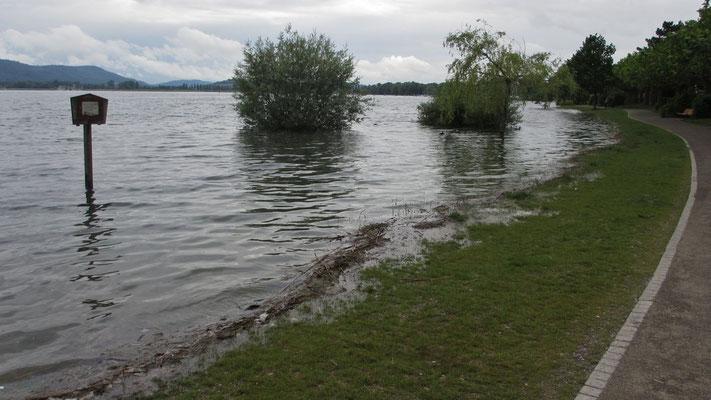 Sonntag: Schnappschuss bei Radolfzell. Nach den schweren Regenfällen in den Vortagen tritt der Bodensee bereits über die Ufer.